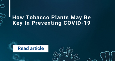 How Tobacco Plants May Be Key In Preventing COVID-19
